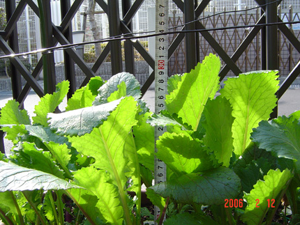 日野菜06-14