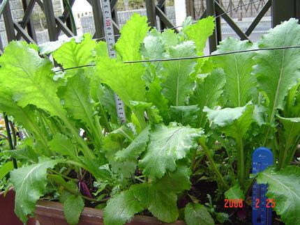 日野菜06-16