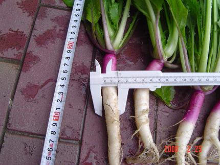 日野菜06-20