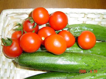 ミニトマト17