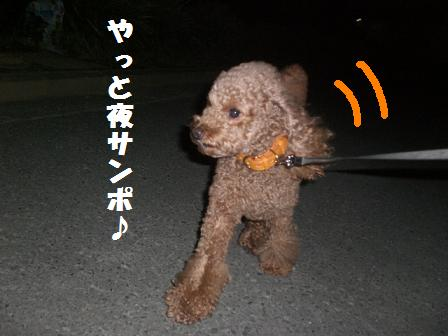 CIMG6196_20081020224136.jpg