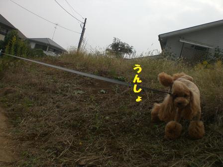 CIMG6237_20081022221305.jpg