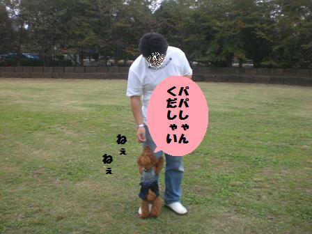 CIMG6339_20081024160957.jpg