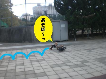 CIMG6756.jpg