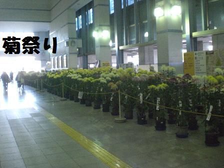 CIMG6807_20081105194104.jpg