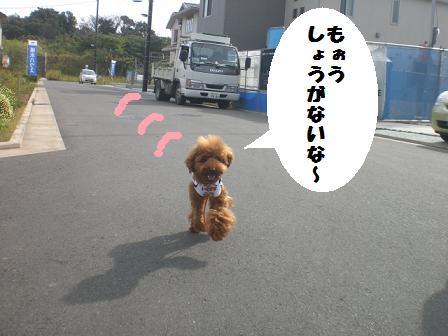 CIMG6929.jpg