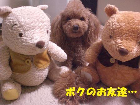 CIMG7032.jpg