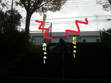 CIMG7043_20081110173916.jpg