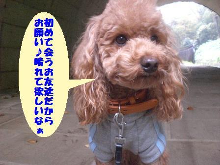 CIMG7276_20081116223555.jpg