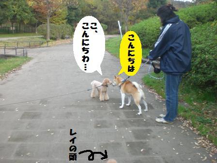 CIMG7303.jpg