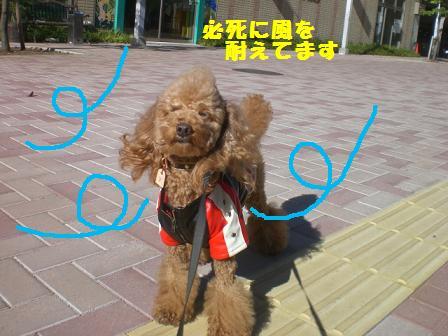 CIMG7369_20081119190644.jpg