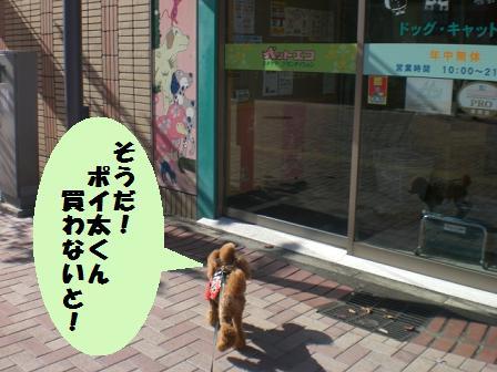 CIMG7374.jpg