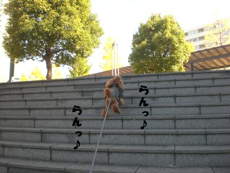 CIMG7398_20081120213912.jpg