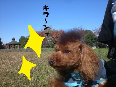 CIMG7461.jpg