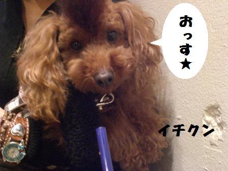 CIMG7946_20081127211638.jpg