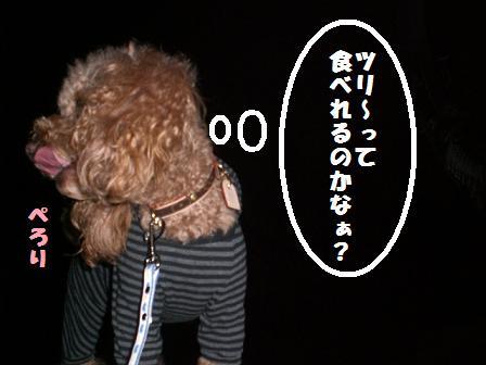 CIMG8102.jpg
