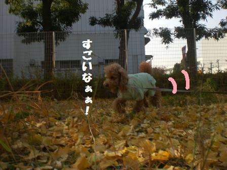 CIMG8201_20081204215218.jpg