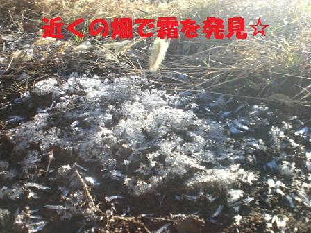 CIMG8281_20081207210830.jpg