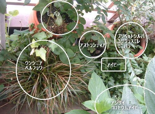 DSC518711.jpg
