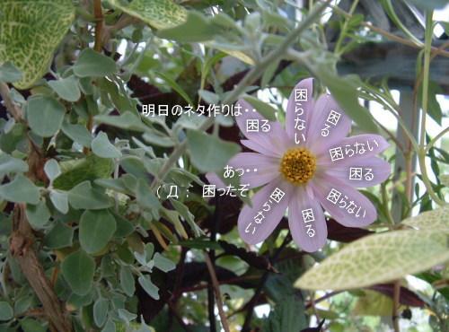 DSC545311.jpg