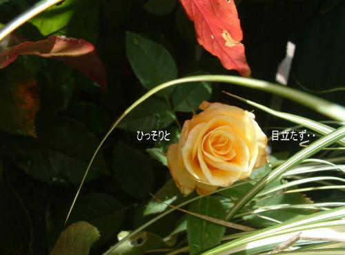 DSC545711.jpg