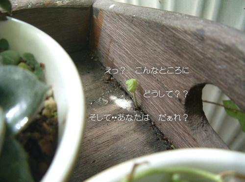 DSC545911.jpg