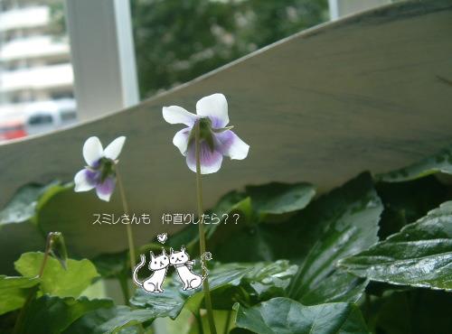 DSC5568111.jpg