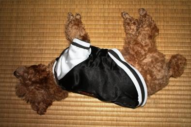 大阪人(犬)の血が騒ぐ