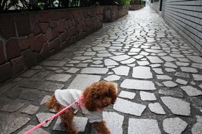 わが町 散歩!