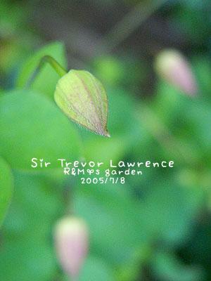 Sir Trevor Lawrence