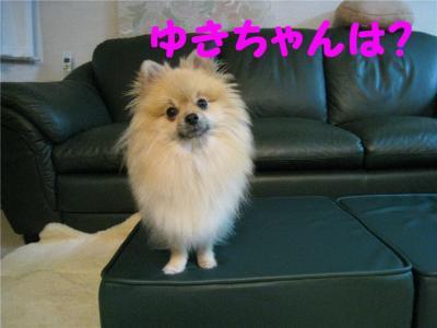 chibi5.jpg