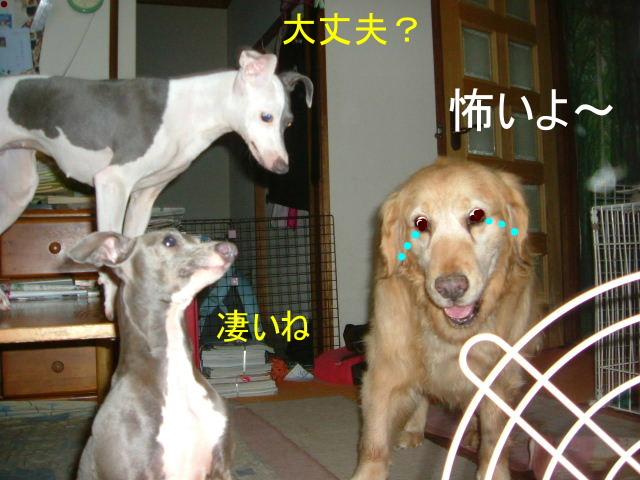 wanko0015a.jpg