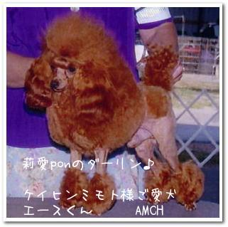 amch2.jpg