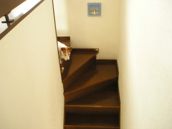 ch階段P1010009