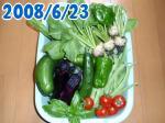 小カブ,キュウリ,ピーマン,ミディアムトマト,ナス,バジル,チンゲンサイ収穫6/23