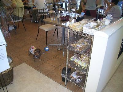 dogcafe001.jpg