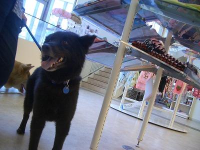 dogcafe004.jpg