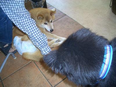 dogcafe012.jpg