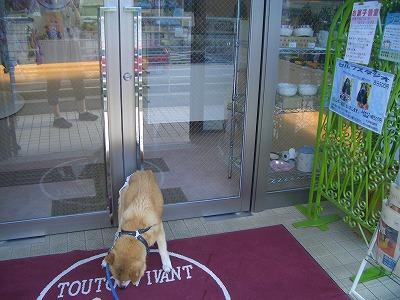 dogcafe017.jpg