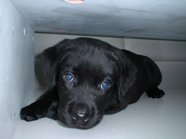 青いお目目のリク