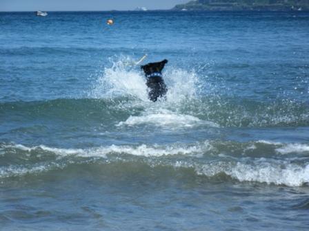 豪快な泳ぎ