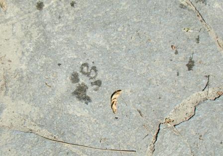 璃空の足跡