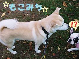 004_20081103174758.jpg