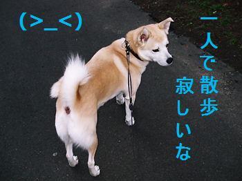 008_20081203214057.jpg