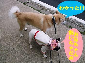 051_20081128223609.jpg