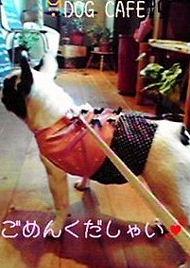 dogcafe3.jpg