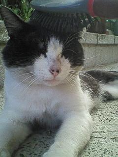 チビ猫21