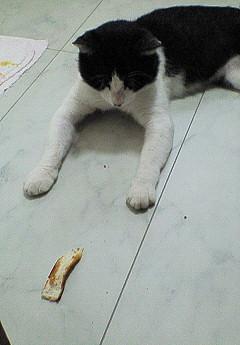チビ猫28