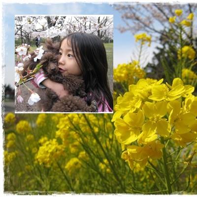 お花見 4