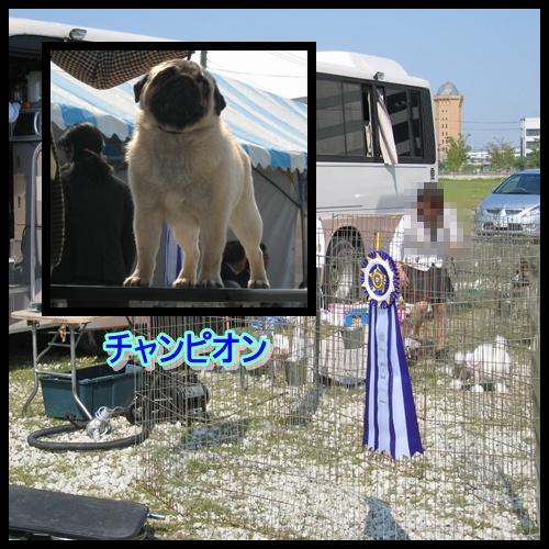 ドッグショー 1